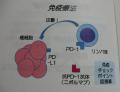 肝がんの免疫療法の研究も紹介